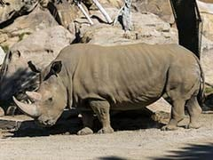And Then There Were 5: Rare Rhino Dies in US