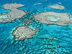 Great Barrier Reef, A World Heritage Site, Remains in UN Watch List
