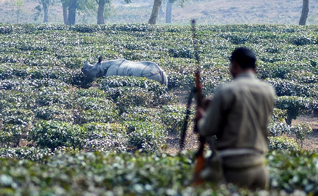 Now Kareena and Babli to Guard Kaziranga Rhinos From Poachers