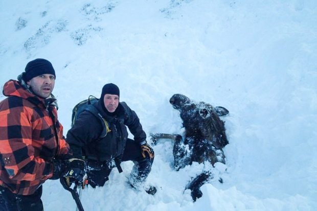 Three Men See Snout, Free Moose Buried in Avalanche