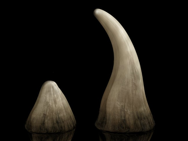 US Auctioneer Fined $1.5 Million for Selling Rhino Horns