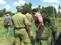25-Year-Old Elephant Electrocuted in Tamil Nadu's Nilgiris