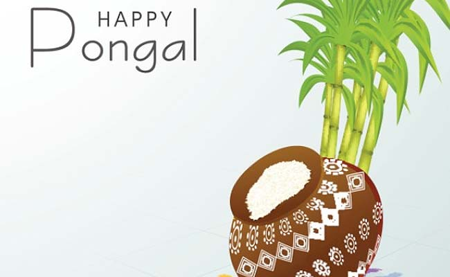 Pongal Celebrated With Traditional Fervour in Tamil Nadu