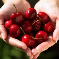 Cherries Lower Gout Attacks by a Third