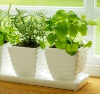 Grow Herbs on Your Windowsill