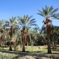 9th Liwa Date festival Kicks off in Abu Dhabi