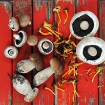 Why Mushrooms are Good for You
