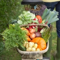 Delhi HC concerned over pesticides in vegetables