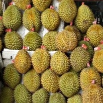 Durian, the world's smelliest fruit, goes on sale in Britain