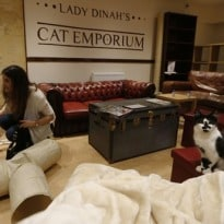London's first cat cafe