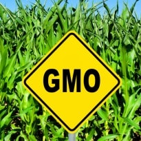 The hot debate about genetically modified foods