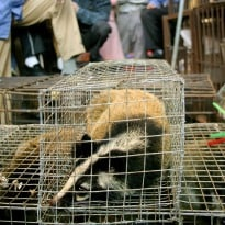 Eating Rare Animals is a Criminal Offense in China