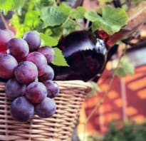 How Well do you Know Your Wine Grapes?