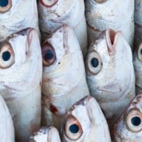 Are Aquaculture and Fisheries a Solution to Food Insecurity?
