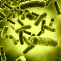 Healthy Gut Bacteria May Prevent Metabolic Syndrome