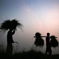 Why Small Farmers In Tamil Nadu Borrow Money At 60 Per Cent Interest