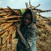12 Paths to Strengthening Food Security in an Unstable World