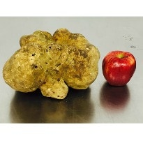 World's Largest White Truffle Sells for $61,250!