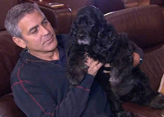 George Clooney treated his pet dog to a spa day last week