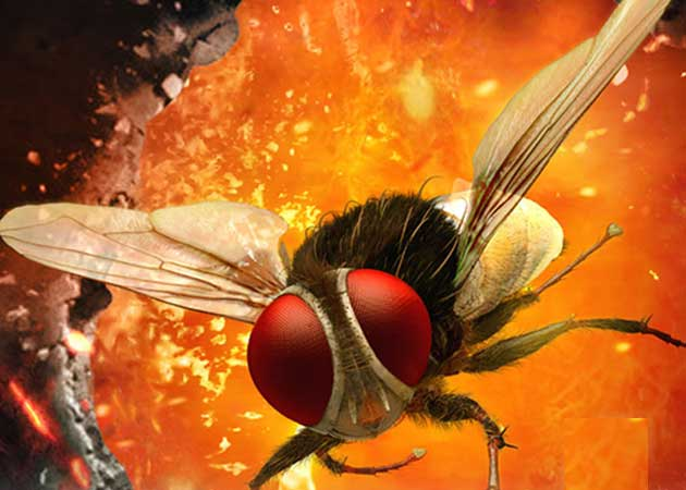 Get ready for the buzz as <i>Eega</i> releases today