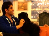 Celebrity Pets: A Dog Named Poshto, a Cat Named Godiva