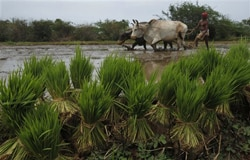 World over-using underground water reserves for agriculture