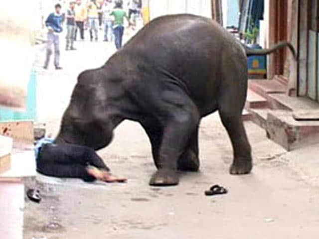 Video : Wild elephants on rampage in Mysore city, one killed