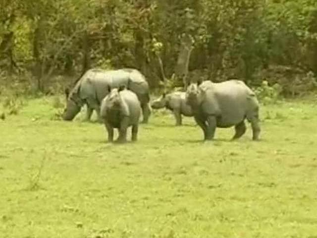 Video : In Kaziranga, worry over increasing rhino poaching