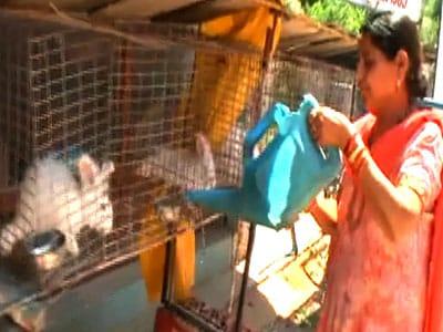 Video : Rocky & Mayur talk about the benefits of Angora wool