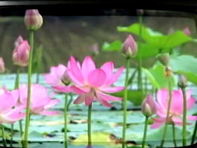 Video : When lotuses, sickles, hammers, brooms and even palms are hidden from public view