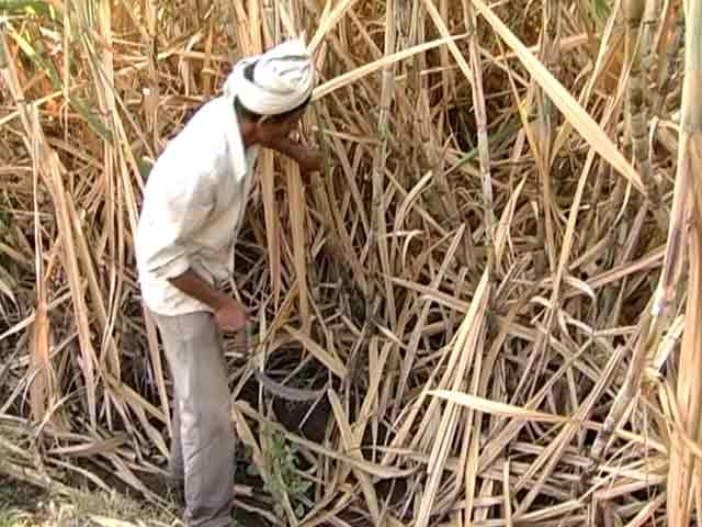 Video : Two sugarcane farmers commit suicide as protests rage for higher prices