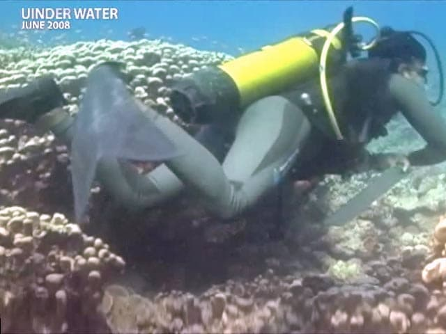 Video : Underwater - The Hidden Truth: India's coral treasures (Aired: June 2008)