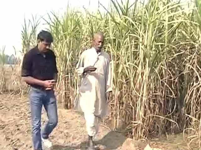 Video : उत्तर प्रदेश के गन्ना किसान अब भी हैं नाराज, प्रदर्शन जारी