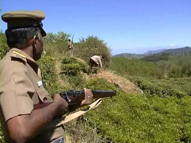 Video : Tiger on the prowl dampens Pongal cheer in Ooty
