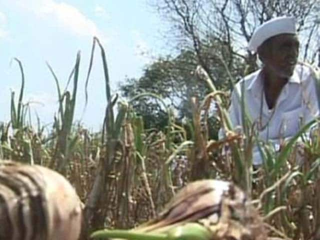 Video : In Maharashtra, 22 farmer suicides in 3 weeks
