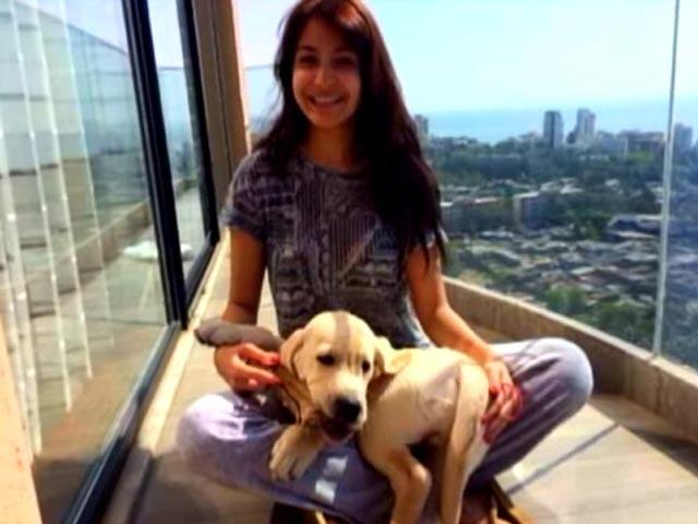 Video : Anushka Sharma's puppy love