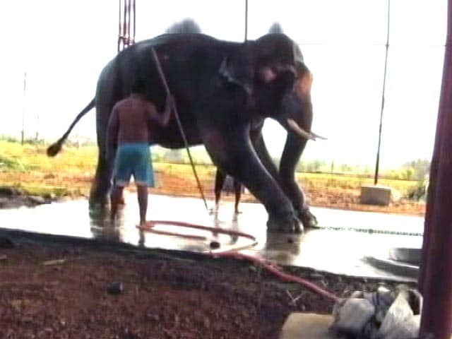 Video : Bombay High Court orders Sunder's release