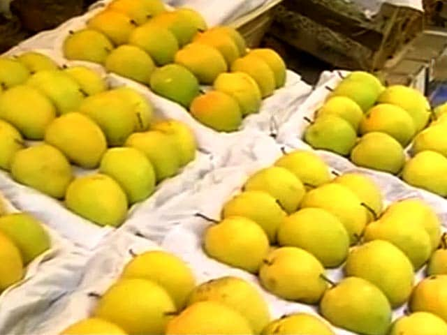 Video : Why European Union's ban on Alphonso Mangoes is a Sweet Deal for Indian Buyers