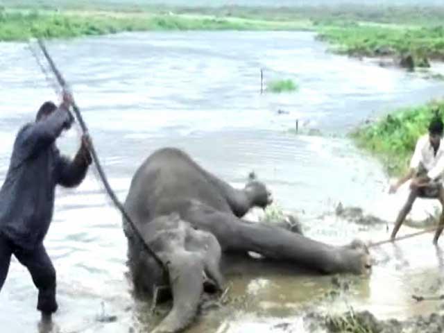 Video : दो हाथियों की जिंदगी की लड़ाई