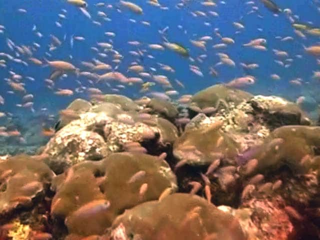 Video : The Magical Coral Reefs of Lakshadweep