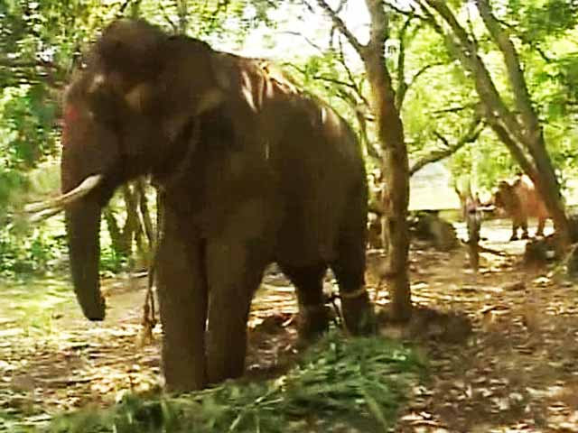Video : After Years of Abuse, Sunder, the Elephant is Home at Last