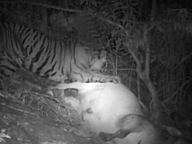 Video : The Save Our Tigers Agenda : Mitigate Man-Animal Conflict