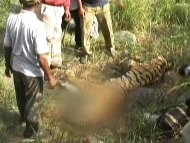 Video : The Tiger Agenda: Is Zero-Tolerance to Poaching Possible?