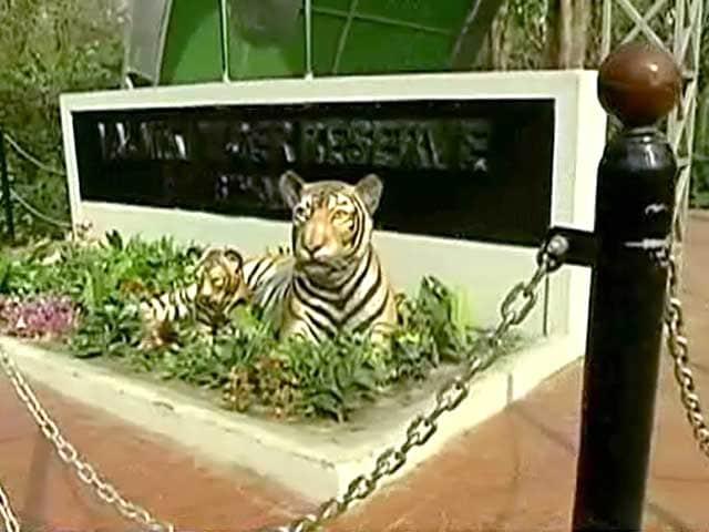 Video : Valmiki Tiger Reserve - The Resurgence