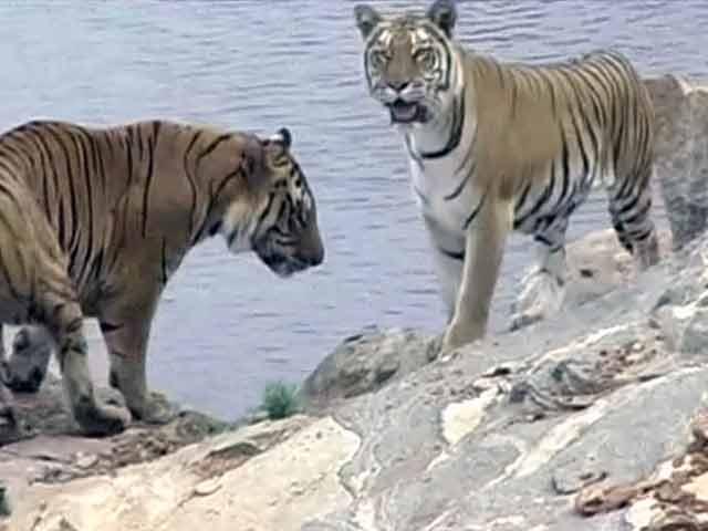 Video : बांदीपुर टाइगर रिजर्व : सफलता और चुनौतियां