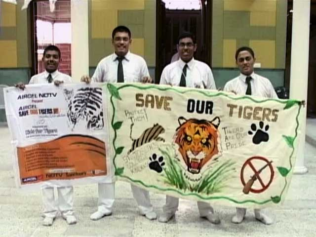Video : World Tiger Day: Art Competition