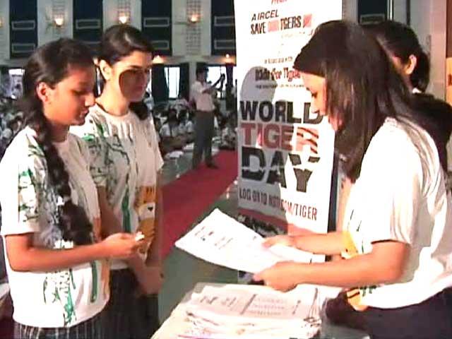 Video : World Tiger Day Celebrations: The Encore Presentation