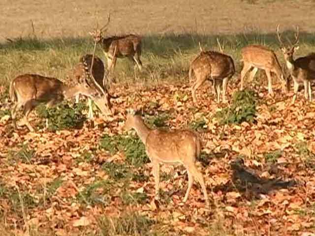 Video : Alarmed at Wildlife Board Rejig, Green Activists Demand PM's Intervention