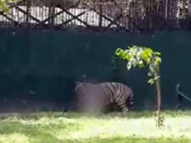 Video : Death in Delhi Zoo