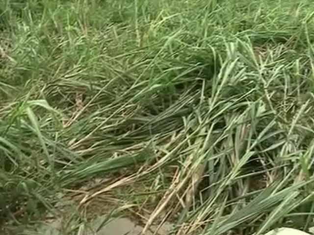Video : In Rural Andhra Pradesh, Farmers Bear the Brunt of Hudhud